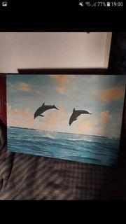 delfin bild