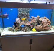 Meerwasseraquarium 400l weiß