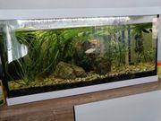 Aquarium mit Besatz und Zubehör