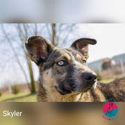 Skyler - Husky-Mix zum Verlieben