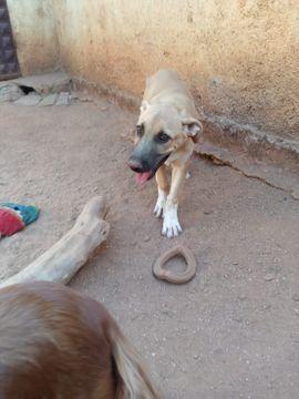 Sly ist reserviert: Kleinanzeigen aus Zülpich - Rubrik Hunde