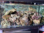 Lebendgestein Meerwasser ca 40 Kg