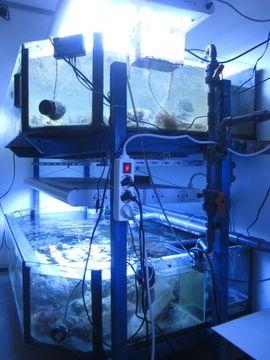 Bild 4 - Osmosewasser für Meerwassaquarium Aquarium Salzwasser - Backnang