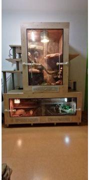 Schönes Doppel-Terrarium mit Kornnatter und
