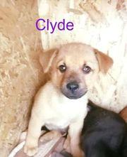 Clyde- wer will meine Bonnie
