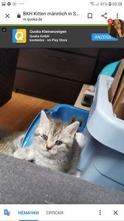 Wir brauche ein Babykatze kaufen