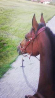 Pferde und Ponys suchen Zuhause
