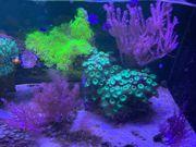 Meerwasser Aquarium Auflösung