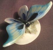 Schmetterling auf Blättern Rosenthal