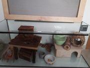 Hamster-Terrarium mit viel Zubehör