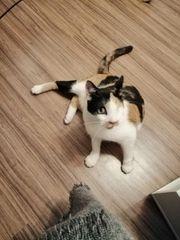 Lotti sucht ihren besten Freund