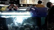 Aquarium AFRIKA Brandungsbecken