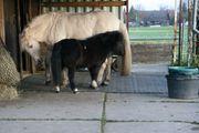 Pflegebeteiligung für meine 2 Pferde -