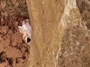 2 leopardengeckos