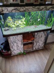 Aquarium mit technik