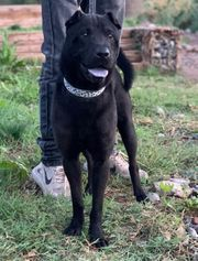 XARP- unser hübscher Hundebub