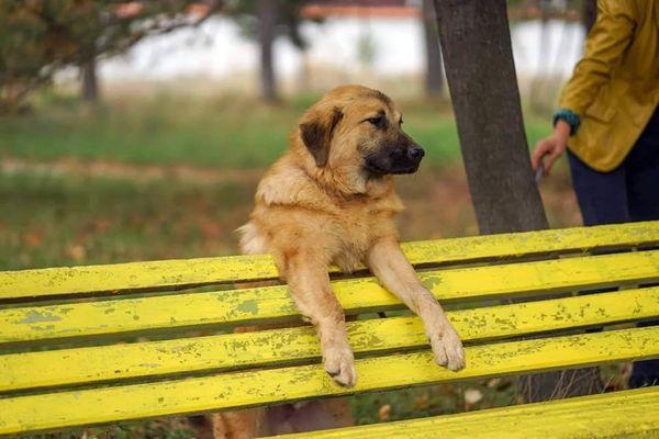Argo auf Körbchensuche Tierschutzhund