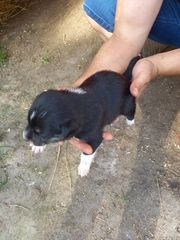 Hurra Hurra unsere Jack Russell