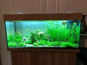 Juwel 180Liter komplett mit Fische