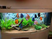 Diskus Aquarium