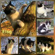 Katze Else 11 Monate kastriert