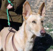 CANELA - Traumhund sucht Traumzuhause