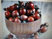 Cherrytomaten Sorte Schwarze Schokolade 10
