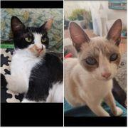 Katzenkinder Valentin Lila ALO