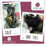 Kätzchen Jolie und Tali warten