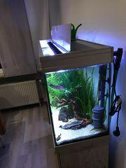 Aquarium Süßwasser 200L