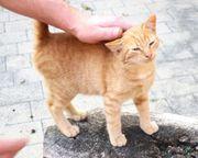 Kätzchen Kitten vom Bauernhof abzugeben