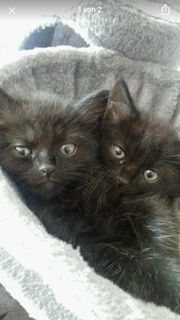 Nur noch 1 Kätzchen zu