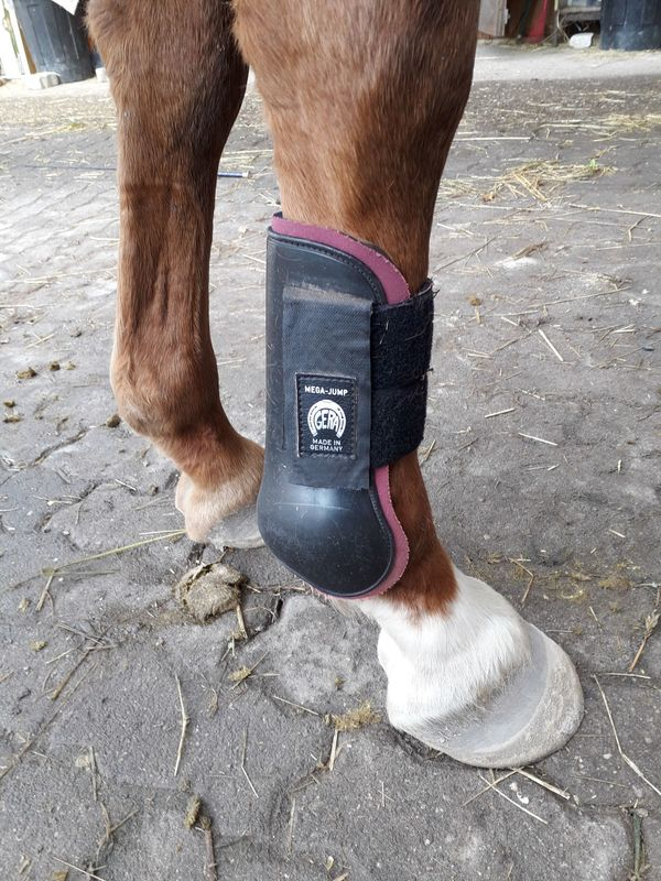 Pferde Streichkappen WB