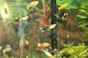 Verschiedene Fische Garnelen und Pflanzen