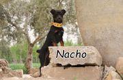 Darf Nacho durch Ihre Hilfe
