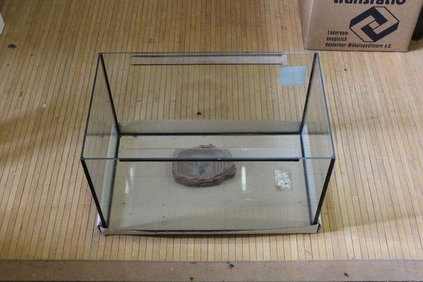 Kleines Terrarium Aquarium aus Glas