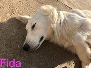 Fida sucht ein Zuhause