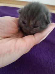 Mega süsse baby kitten