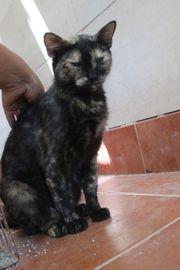 Ayla liebe schildpatt Katze