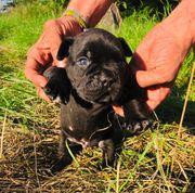 Hundewelpen suchen ein neues Zuhause