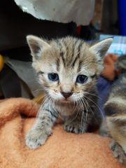 Katzenbabies suchen verantwortungsvolles Zuhause