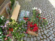 Kunstblumen und Grünpflanzen neu