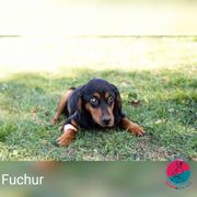 Fuchur - wartet auf seinen Retter