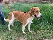 Xixu- unser liebevolles Hundebübchen