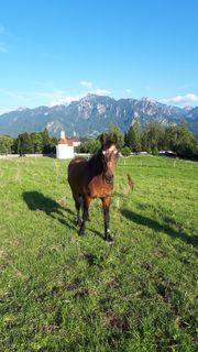 Pferdebox und Offenstallplatz frei