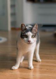 Katze Marta sucht Dich zum