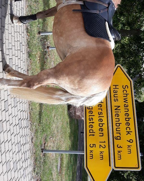 Pferdebox einstellplatz offenstall