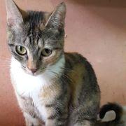 Süßes Katzenmädchen Fleur sucht ihre