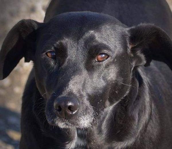 ASH - erst Hundeschule und dann