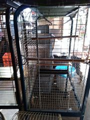Papageien Käfige
